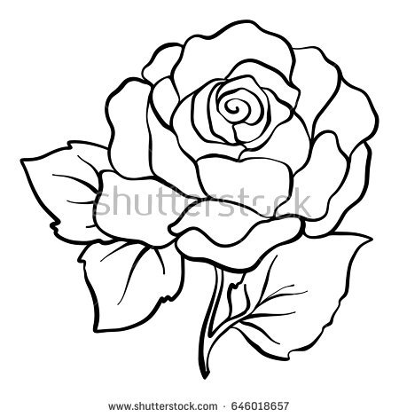450x470 Rose Outline Rose Outline Stock Images Royalty Free Images Vectors