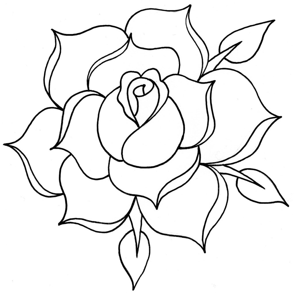 1024x1020 Traditional Rose Drawing