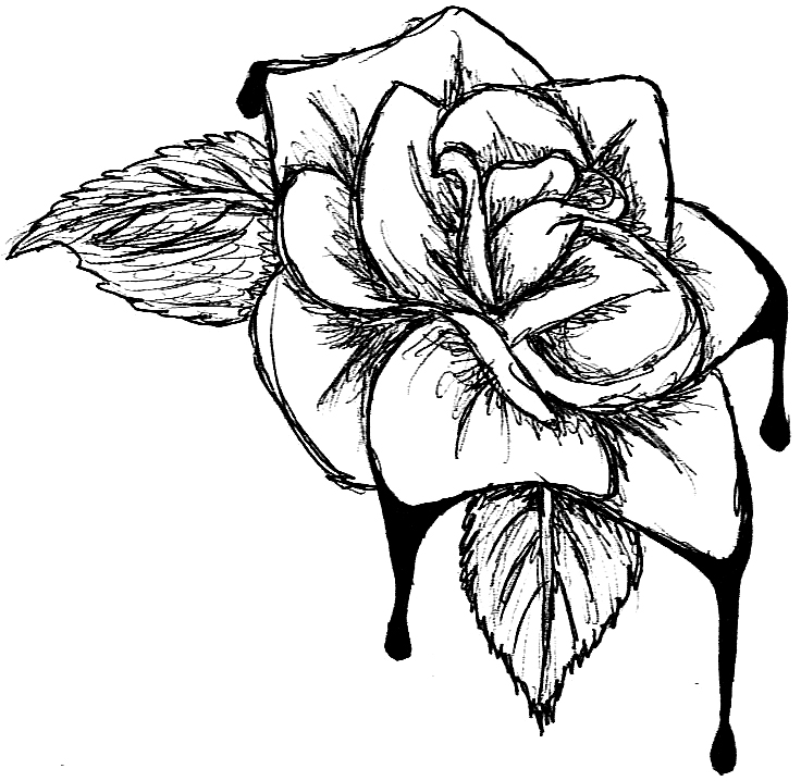 736x718 Blood Cabbage Rose Clipart