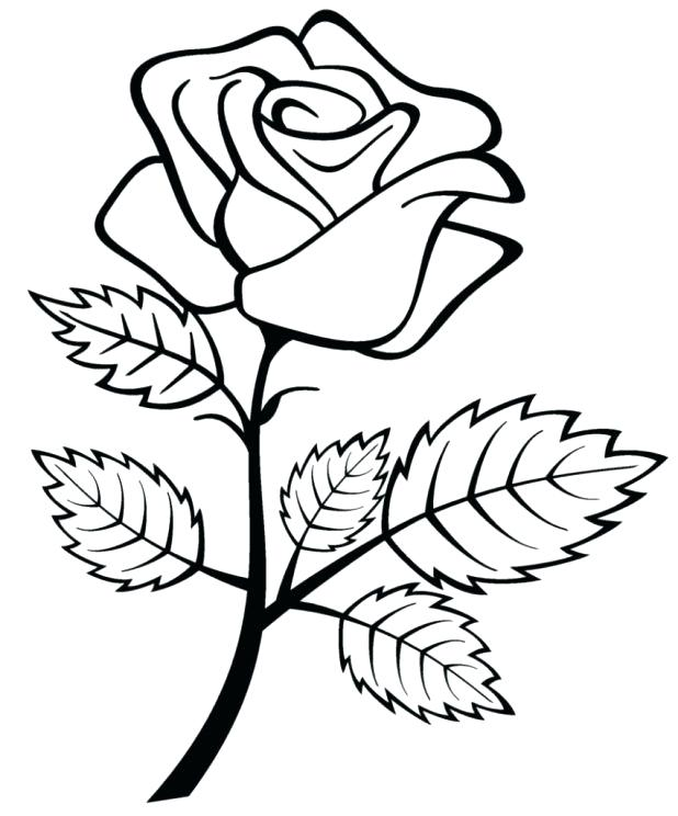 Rose Drawing Color At Getdrawings Com Free For Personal Use Rose