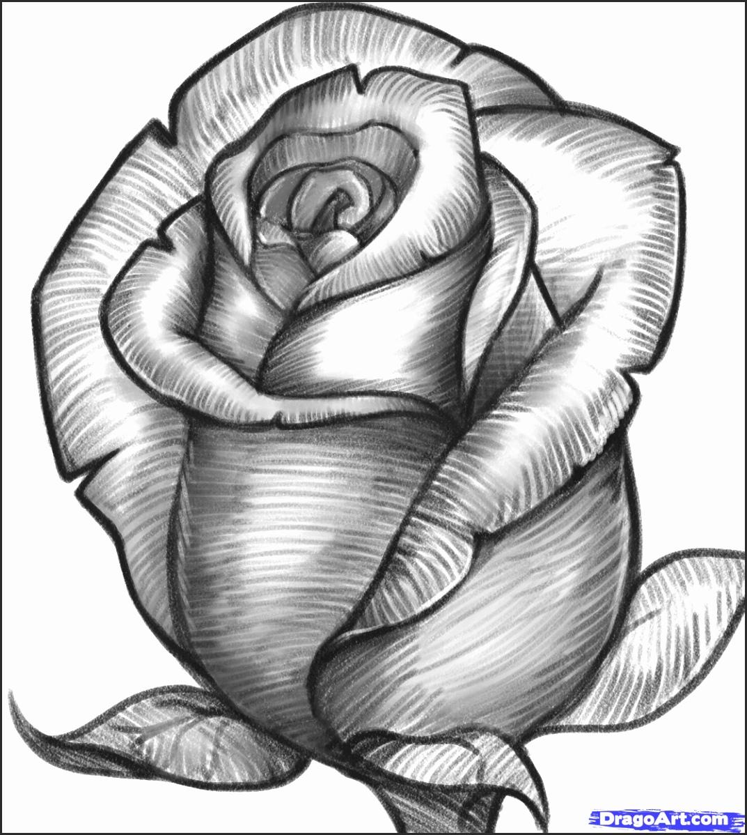 Rose Drawing Image