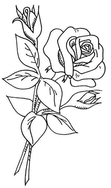 Rose Drawing In Color
