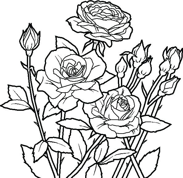593x577 Flower Coloring Pages To Print Rose Color Page