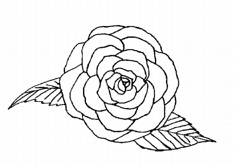 752x536 Rose Flower Coloring Page To Color
