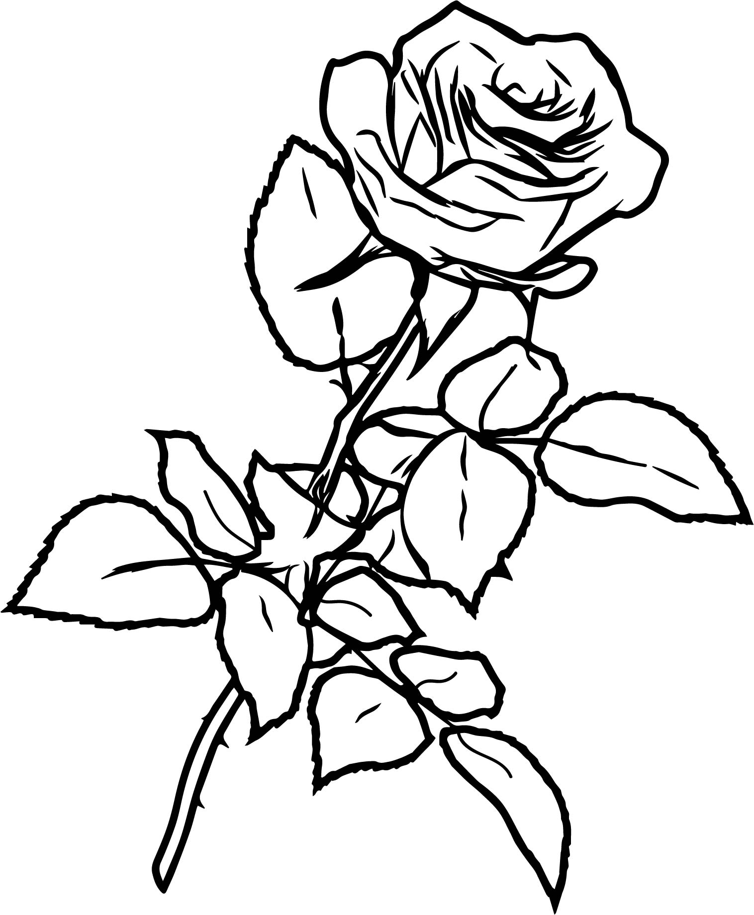Rose Drawing In Pencil