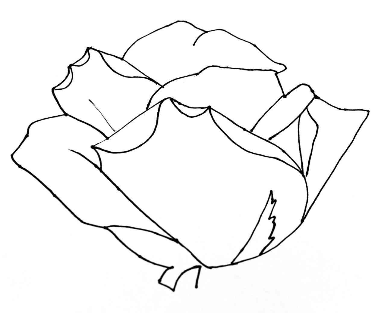 1264x1040 Drawing Easy Pictures Of Roses To Draw A Rose In Simple Stencil