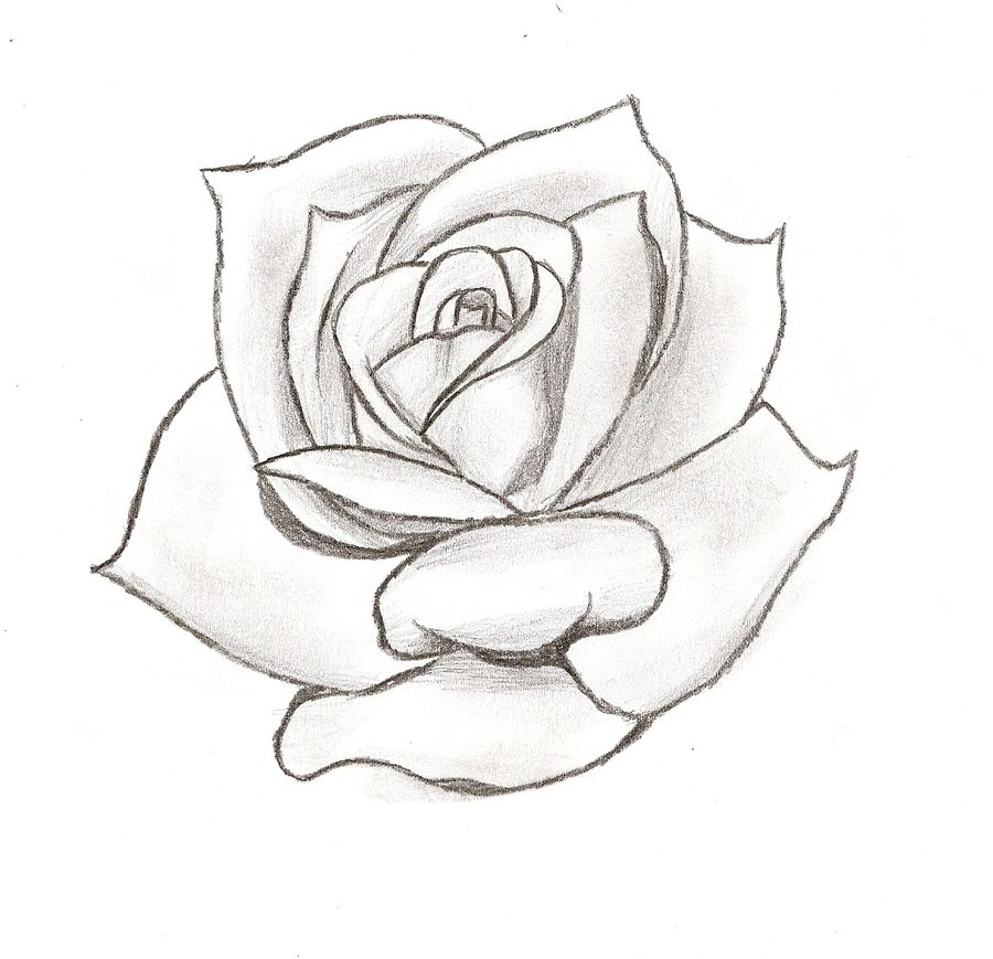 900x869 Stencil Of Rose