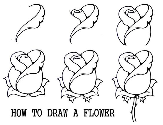 564x433 image result for roses drawings in pencil step by step roses