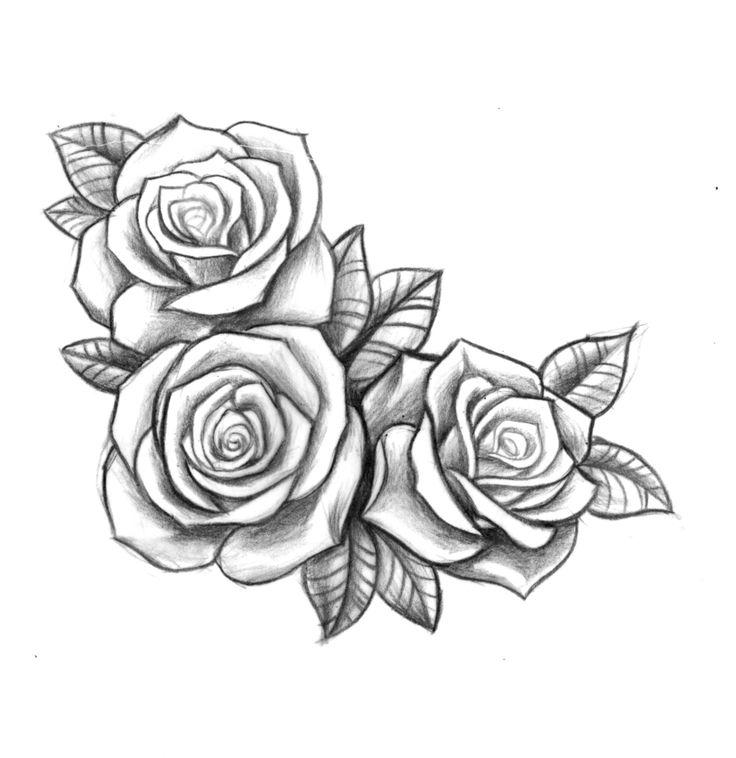 736x758 Photos 3 Roses Drawing,