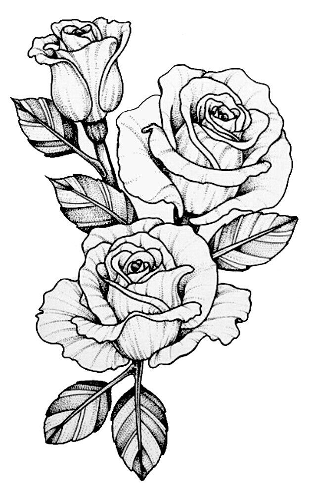 635x992 28 Best Rose Drawings Images On Rose Drawings, Tattoo
