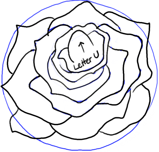 525x503 How To Draw Roses Opening In Full Bloom Step By Step Drawing