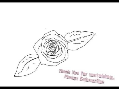 480x360 How To Draw A Beautiful Rose Flower Top View