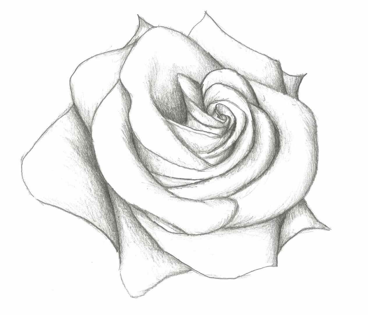 1264x1082 The Beast Rose Drawing Side View Step By Ua Draw Cute Kawaii Chibi