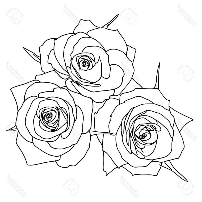 775x775 Top Three Roses Outline Vector Pictures Free Clip Art Designs