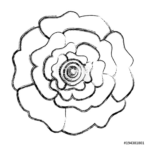 500x500 Decorative Natural Carnation Flower Top View Vector Illustration