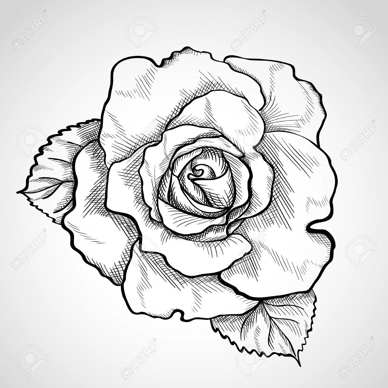 1300x1300 Hoontoidly Rose Drawings In Pencil Outline Images