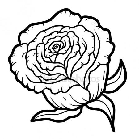 450x450 Deep Contour Rose, Top View Isolated Sketch Vector Illustration