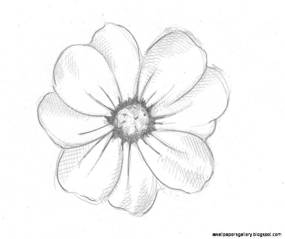 957x803 Drawn Flower Pencil Easy