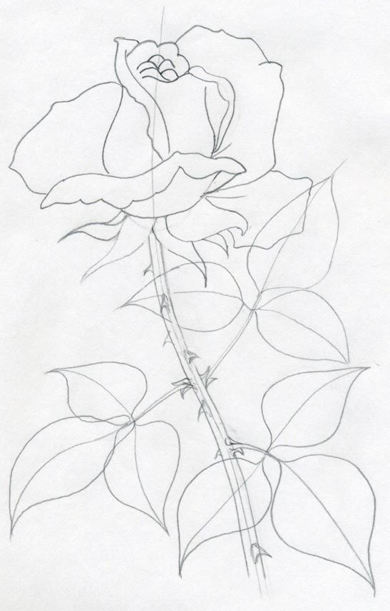 547x857 Draw A Rose Quickly, Simply And Easily Remember