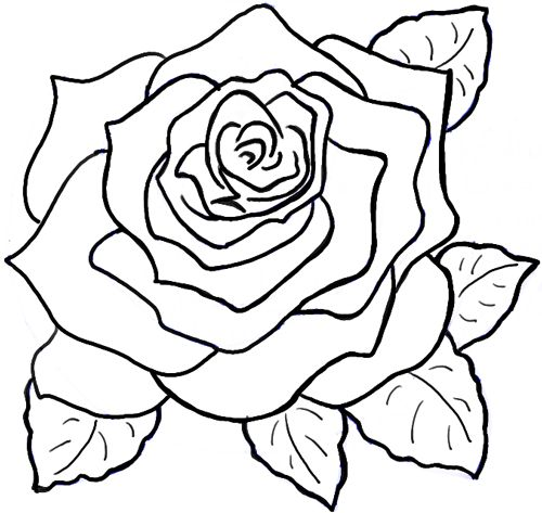 500x473 Best Roses Drawing Tutorial Ideas On How To Draw