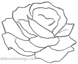 271x222 Roses Outline Drawing