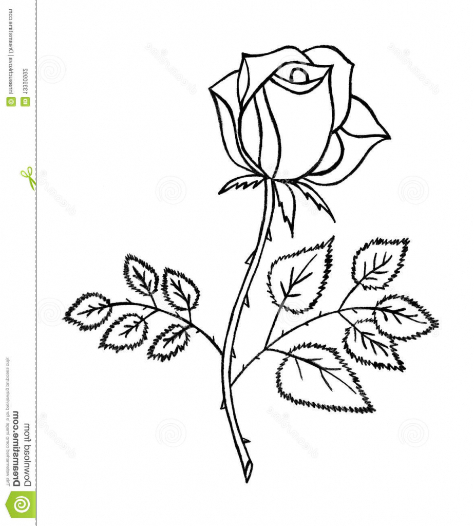 923x1024 Out Line Pencil Sketch Of Rose Flower Rose Picture Drawing Rose