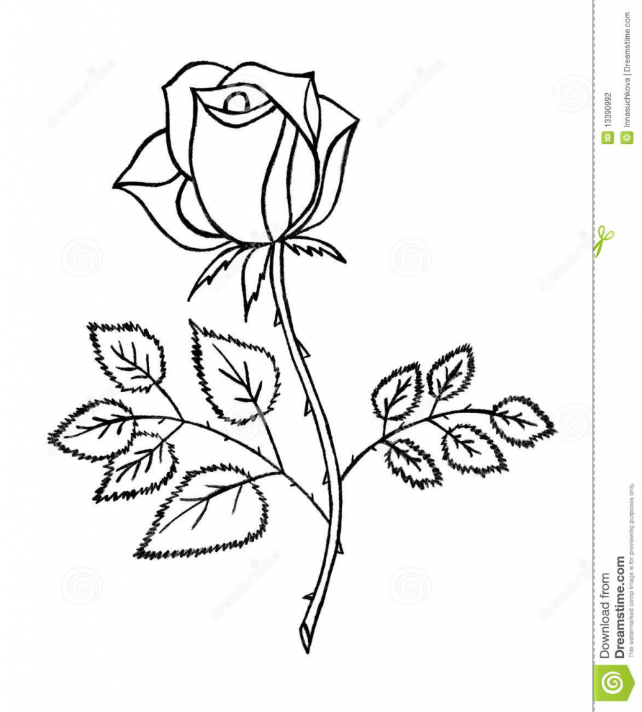 923x1024 Pencil Sketch Of Rose Flower Rose Pencil Drawing Step By Step Rose