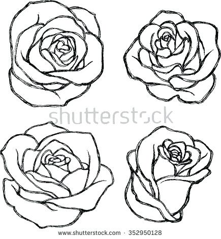 435x470 Drawn Rose Image Titled Draw A Rose Step Drawn Rose Pictures Affan