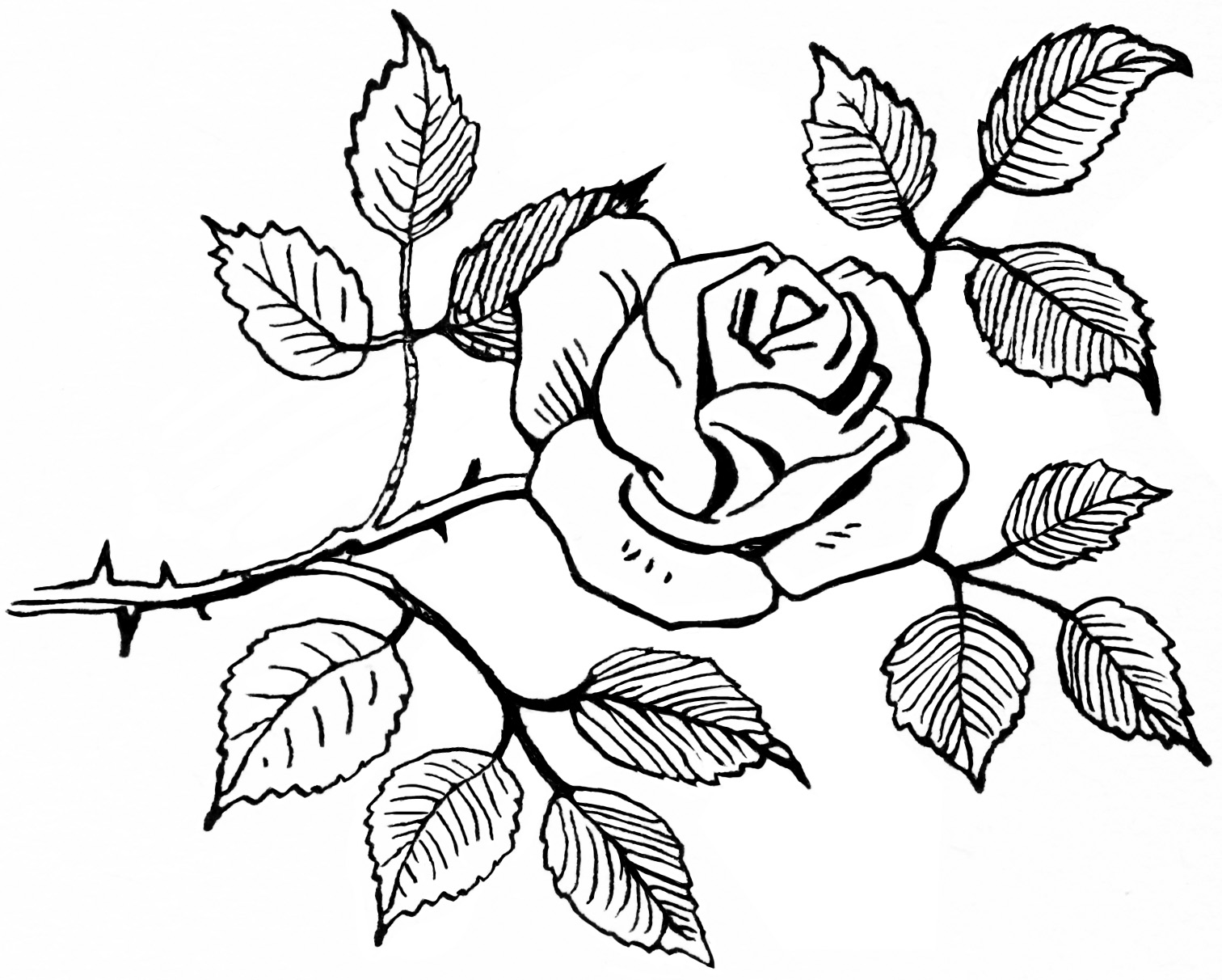 1512x1212 Sketch Of Rose Clipart