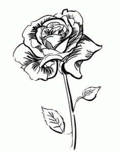 236x300 Tips How To Draw A Rose Step By Step For Beginners