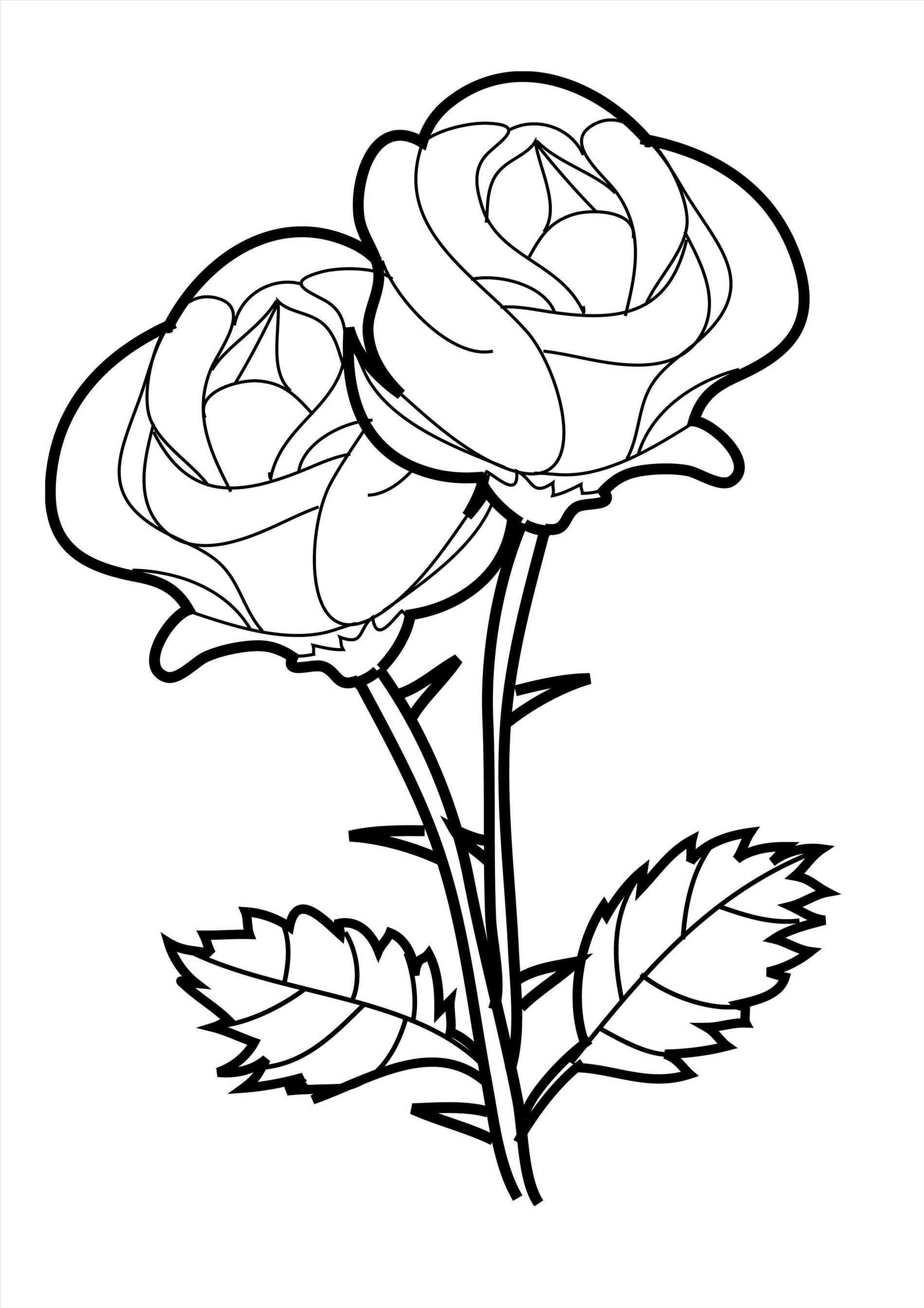 1899x2687 Drawings Of Easy Roses How To Draw A Rose Flower Easy Line Drawing