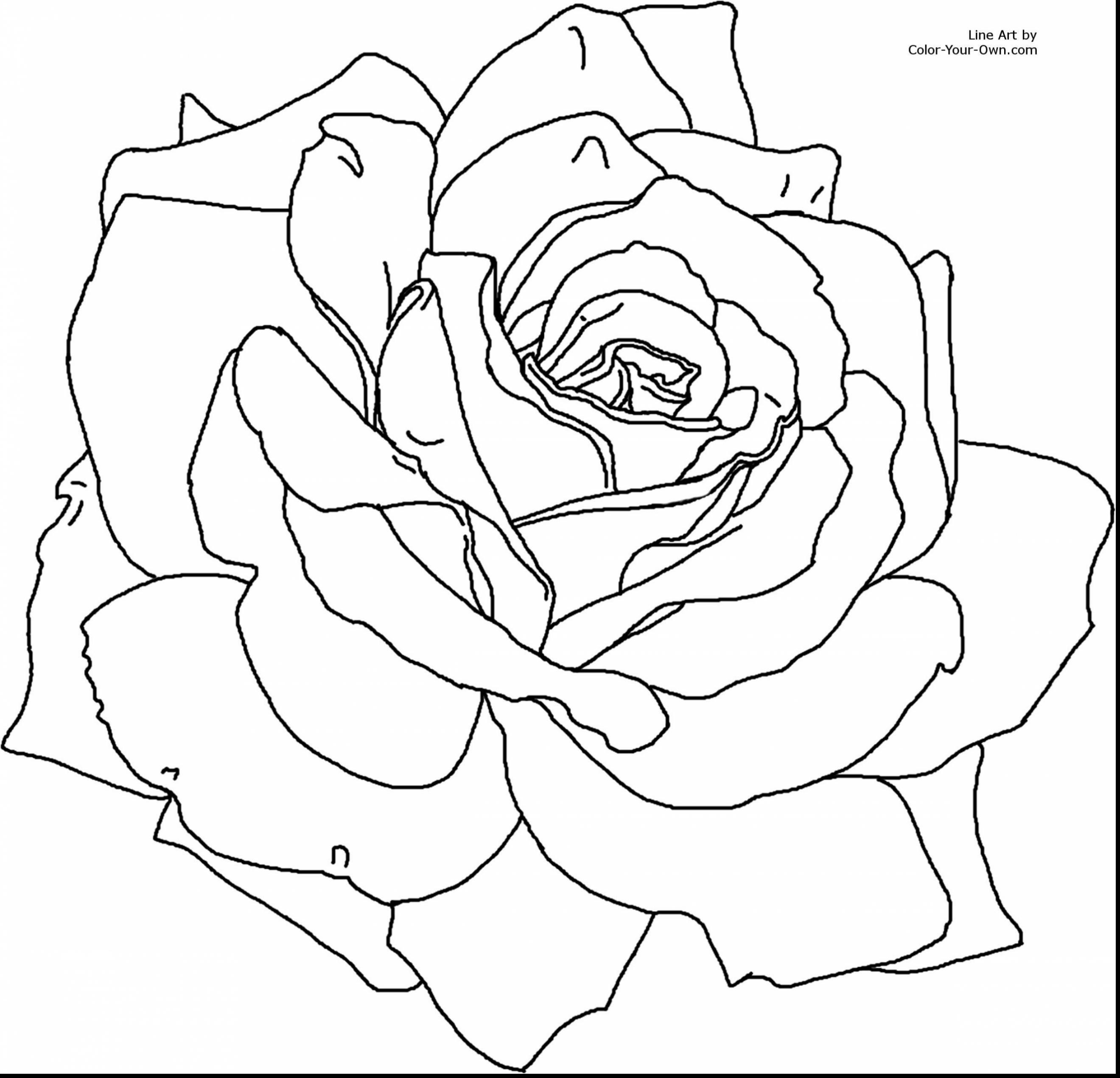 2640x2542 Nice Rose Flower Coloring Pages For Kids Beautiful Extraordinary