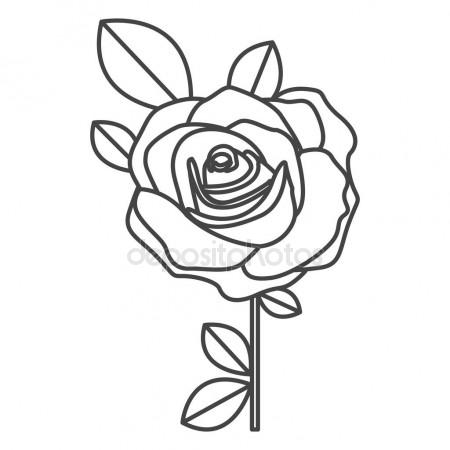450x450 Black And White Line Drawing Of Rose Flower Stock Vector