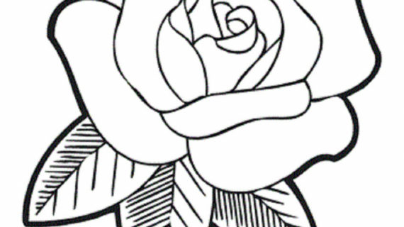 570x320 Rose Flower For Drawing How To Draw A Rose Flower Easy Line