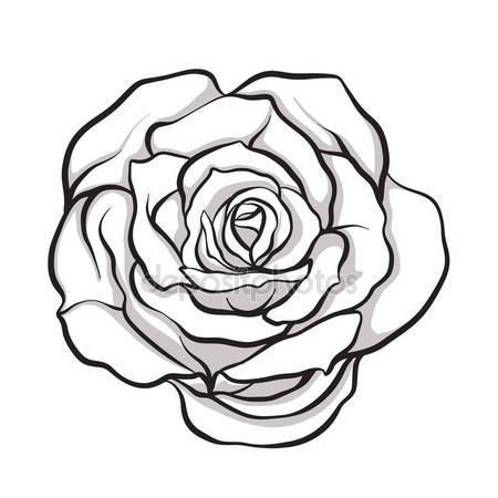450x450 Rose Sketch Stock Vector Likka