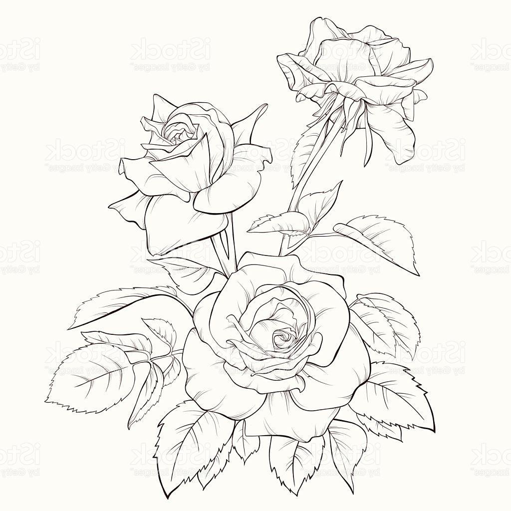 1024x1024 Unique Rose Flower Handdrawn Contour Lines And Strokes Element