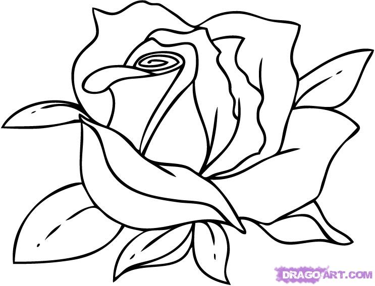 743x567 How To Draw A Rose Step By Step