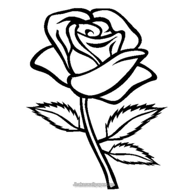 658x671 Rose Flower Coloring Pages