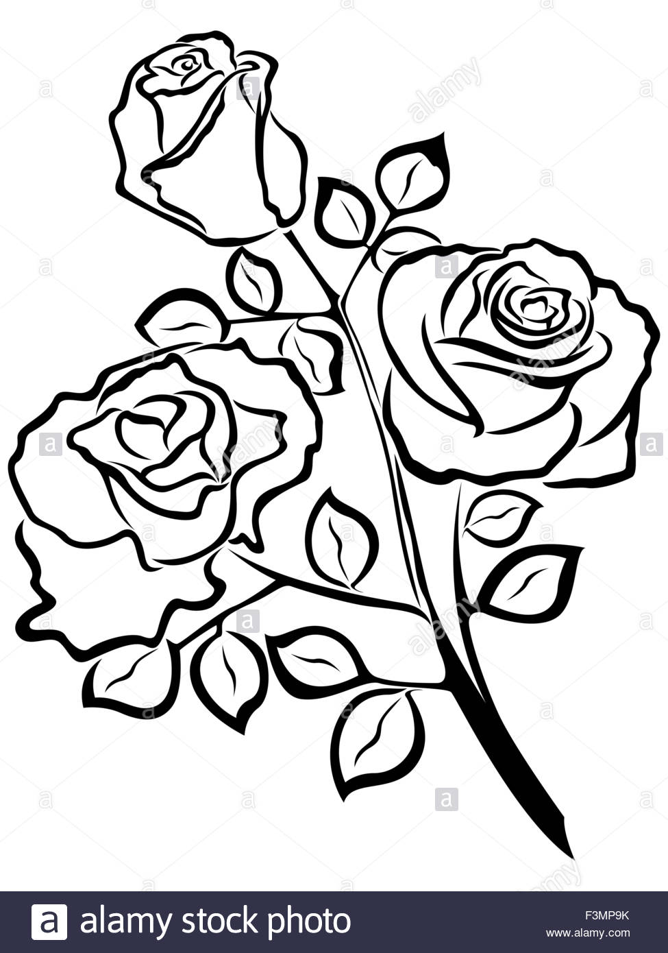 975x1390 Black Outline Of Rose Flowers Isolated On A White Background