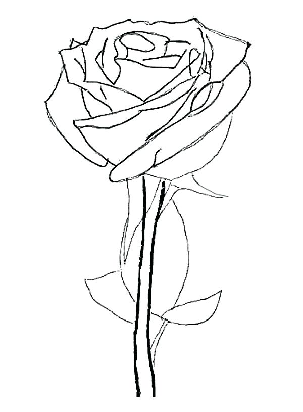 600x815 Coloring Pages Rose Rose Flower Coloring Page Coloring Pages