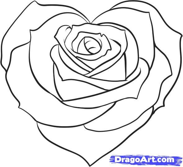 590x541 Heart And Rose Drawings In Pencil Free Download Clip Art Free