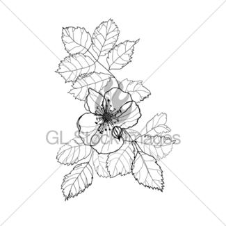 325x325 Rose Flower Pencil Drawing Gl Stock Images