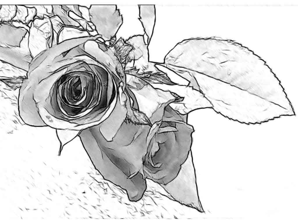 1024x768 Simple Art Drawing Ideas Pencil Drawing Of Rose Flower Pencil