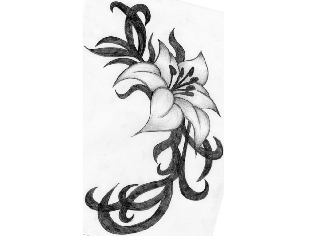 1024x768 Collection Flowers Pencil Drawing Pencil Sketch Of Flowers Pencil
