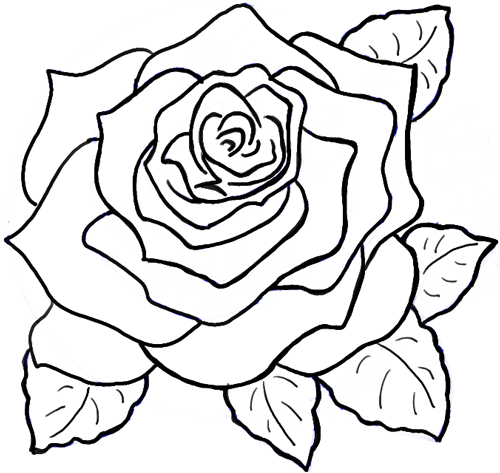 500x473 Drawn Rose Full