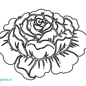 300x300 Coloring Pages Roses Flowers Best Of Flower Luxury