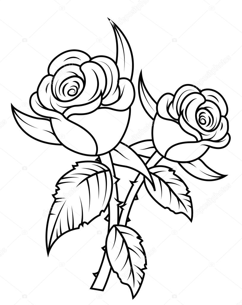 815x1024 Rose Flowers Clipart Stock Vector Baavli