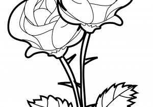 300x210 Rose Flowers Drawings How To Draw A Rose Flower Easy Line Drawing