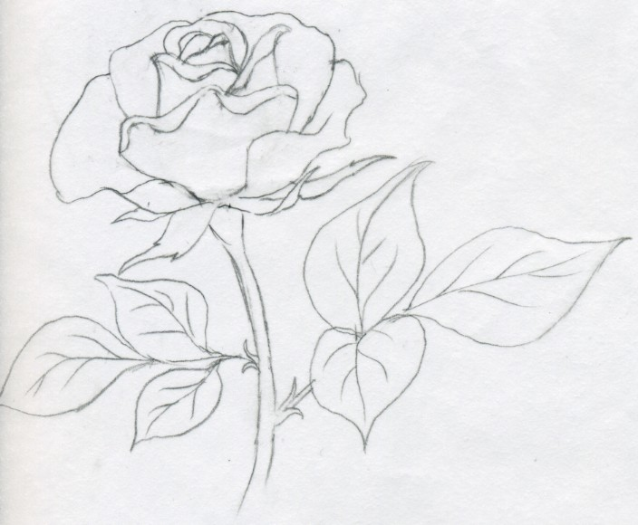 704x580 Draw A Rose Quickly, Simply And Easily