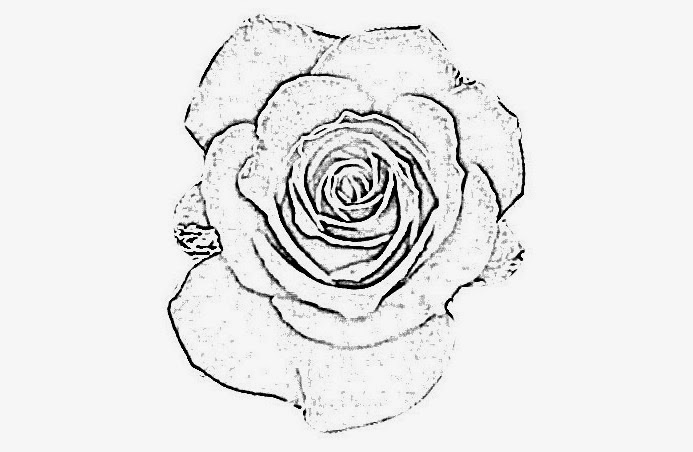 693x452 Drawing Rose Flowers